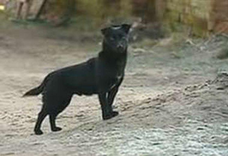 Niña se salva de ser raptada gracias a su perro