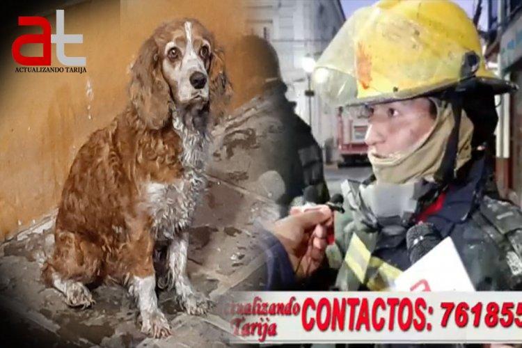 """""""Coty"""" El perrito salvado de morir en el incendio frente al mercado central de Tarija"""
